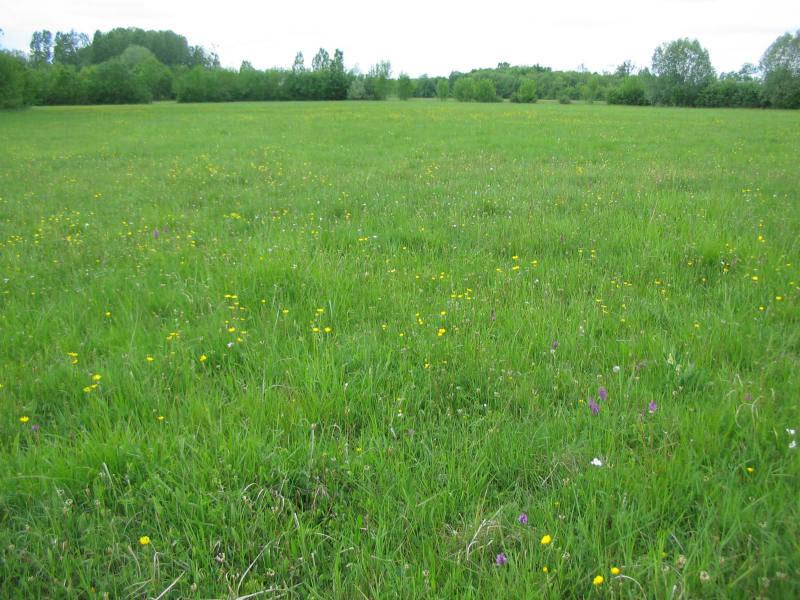 Prairies du Fouzon à COUFFY © Manuella-Vérité