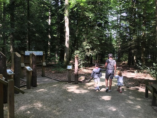 Promenons-nous….Visite découverte du sentier de l'orée du bois à SENONCHES - 2  © nadia desilles
