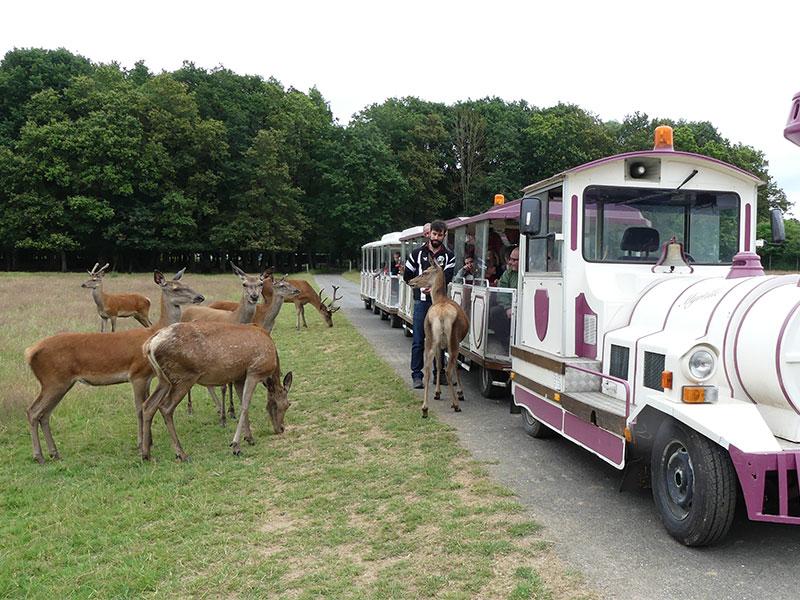 Réserve de Beaumarchais – Les grands gibiers d'élevage en Safari Train à AUTRECHE © Réserve de Beaumarchais