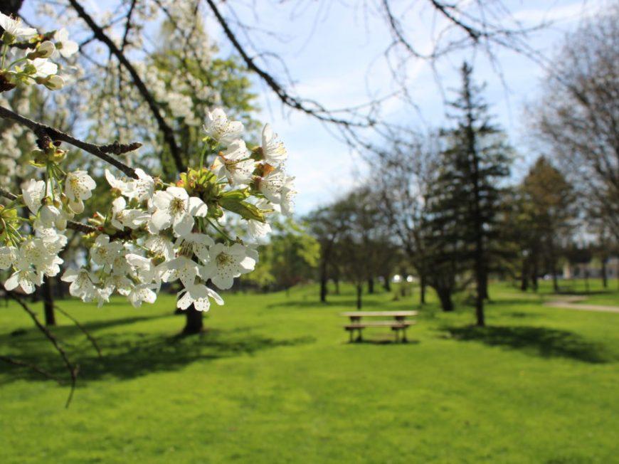 Parc de l'Isle à CEPOY © Mairie de Cepoy
