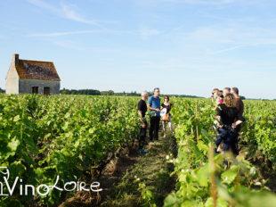 Vinoloire Wine-tours à VOUVRAY - 13  © Vincent Delaby