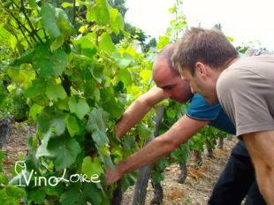 Vinoloire Wine-tours à VOUVRAY - 23  © Vincent Delaby