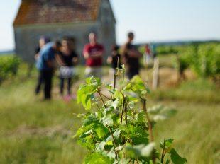Vinoloire Wine-tours à VOUVRAY - 8  © VinoLoire