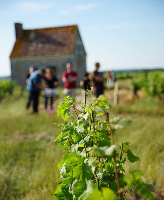 Vinoloire Wine-tours à VOUVRAY © VinoLoire