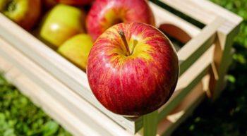 apple-2-2