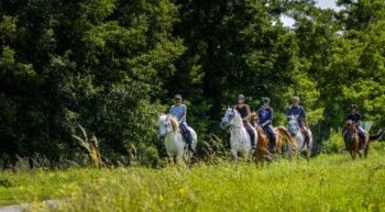 boucle equestre