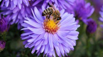 Spécialité de miel