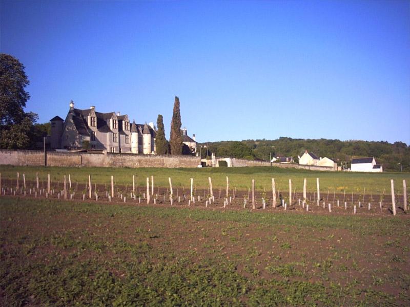 Château de la Vauguyon à CHINON © Droits réservés
