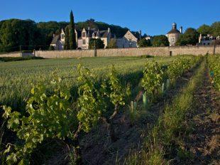 Château de la Vauguyon à CHINON - 2  © Droits réservés
