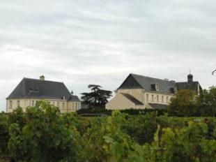 Clos de l'Abbaye à BOURGUEIL - 5  ©  jeremy Lorieux