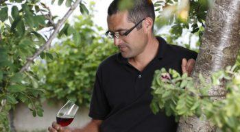 domaine du sorbier – vignes- © domaine du sorbier