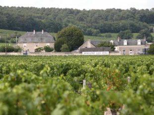 Domaine Les Pins à BOURGUEIL - 2  ©  Dominique Couineau