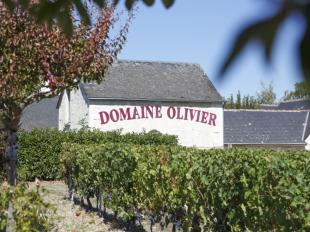 Domaine Olivier à SAINT-NICOLAS-DE-BOURGUEIL - 3  © domaine olivier