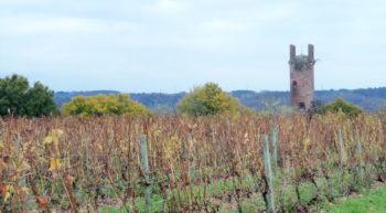 Vignoble de la Houbellerie