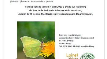 Mini-inventaire de la biodiversité : ANNULEE, reportée ultérieurement_1