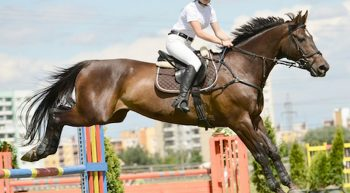 equitation-medium