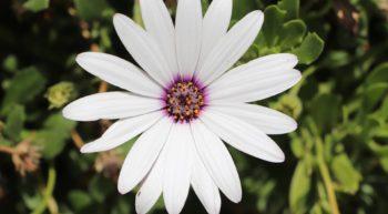 flower-4209254-960-720