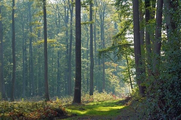 A l'écoute du brame du cerf à SENONCHES © OT forêts du perche