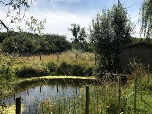 La Motte «Ferme royale» à AVRILLE-LES-PONCEAUX - 13  © Gite la motte ferme royale