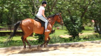horses-816793_1920