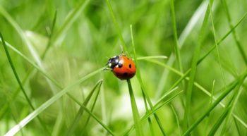 insectes-campinglangeais-2019