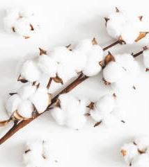 Exposition – De la fleur au tissu, le coton et la mode masculine à ARGENTON-SUR-CREUSE © istock