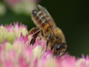La belle affaire, visite du Rucher des terres chaudes à CINQ-MARS-LA-PILE - 2  © le rucher des terres chaudes