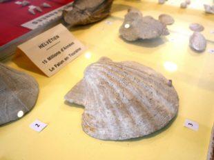 Musée du Savignéen à SAVIGNE-SUR-LATHAN - 13  © OT CB