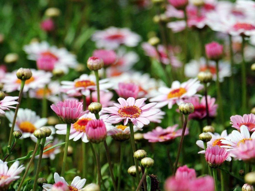 Parc de la Colline à MONTARGIS © Pixabay