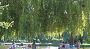 Bourgueil Pique Nique Parc Capitaine