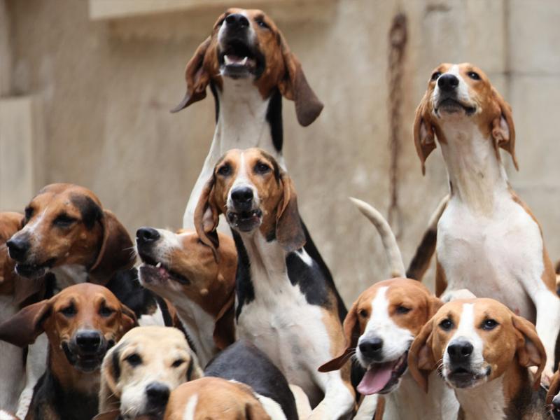 Repas des chiens à CLERE-LES-PINS ©  Château de Champchevrier