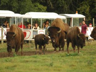 Réserve de Beaumarchais – Les grands gibiers d'élevage en Safari Train à AUTRECHE - 5  © Réserve de Beaumarchais