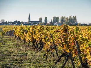 Syndicat des vins de Saint Nicolas de Bourgueil à SAINT-NICOLAS-DE-BOURGUEIL - 3  ©  David Darrault
