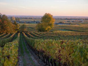 Syndicat des vins de Saint Nicolas de Bourgueil à SAINT-NICOLAS-DE-BOURGUEIL - 2  ©  David Darrault
