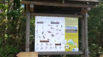 Sentier de découverte du lac de Rillé