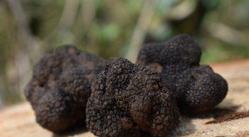 Truffière des Blanchets