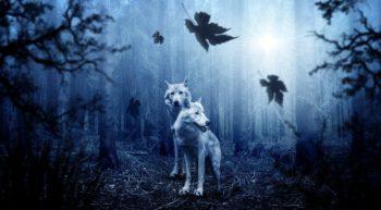 wolf-2864647-960-720